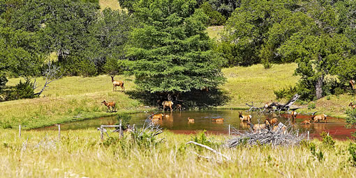 Texas Wildlife Property Tax Classification: A Quick Glance